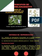 FITOMEJORAMIENTO- MECANISMOS DE REPRODUCCION DE LAS PLANTAS.ppt