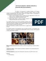 Tema 4. Atención de Enfermería a Pacientes Con Alteraciones Nefro-urológicas6