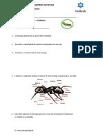 Especialidade de formigas