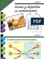 Digestión de los carbohidratos