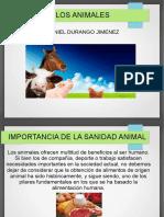 Sanidad Animal Daniel Durango