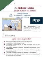 celulas.pdf