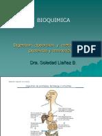 INDUSTRIASdigestion-y-metabolismo-de-proteinas-y-aminoacidos.ppt