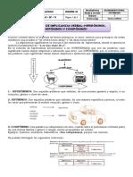 IMPLICANCIA VERBAL- 6TO PRIMARIA BRUNING.docx