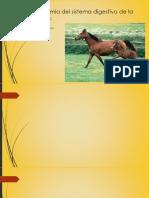 yegu55Ubicación y estructuras.pptx