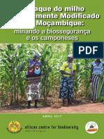 GMO in Mozambique Report Port Web