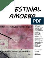 PARA LAB - 2 Intestinal Amoeba111