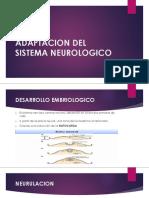 Adaptacion Del Sistema NEUROLOGICO