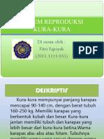 Sistem Reproduksi Kura-Kura.pptx