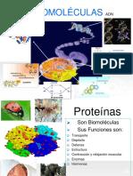 Parte II Proteinas