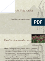 Malezas de Hoja Ancha - Amarantaceae