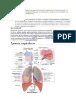 vías respiratorias.docx