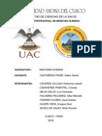 casos clinicos anato.docx