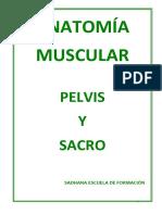 Anatomia Pelvis Sacro