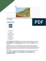 Biocarburante.docx