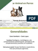 BA en Caninos