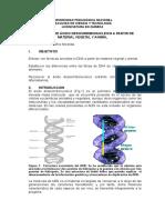 Extraccion de DNA Vegetal y Humano Sonia Cecilia