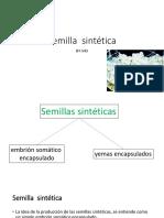 07 b Semilla Sintética