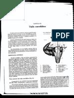 tallo.pdf