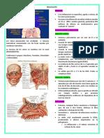 Rinosinusitis.docx