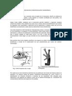 Informe Taxonomia William Mauricio Guate