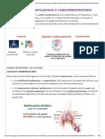 05--sistema-pulmonar.pdf