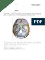1. Anatomía Etmoides