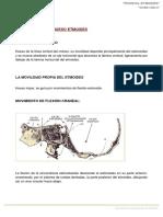 2. Biomecánica Etmoides