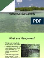 Mangrove Ecosystems1