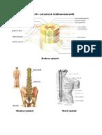 poze sistem nervos.docx