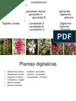 263462477-5-digitalicos-ppt.ppt