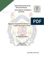Repaso_de_la_Etologia_de_Felinos_Residen.docx