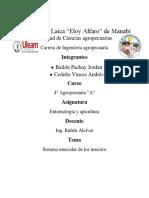 sistema muscular de los insectos.docx