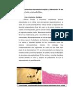 Patologia Parte 2