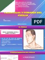 Triangulos Del Cuello Seminario Cirugia 1