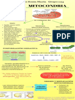 MITOCONDRIA (1)