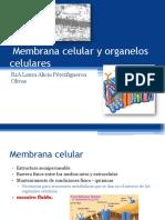 Membrana Celular y Organelos Celulares