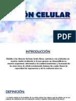 Lesión Celular Patologia