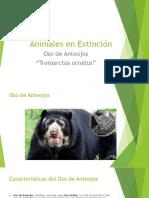 Tarea Charly Animales en Extinción