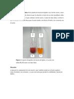Resultados de Bioquimica