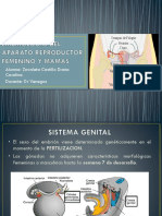Embriologia y Anatomia Part 1