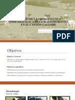Estudio de La Problemática Epidemiológica de La Mastitis