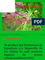 fitopatologia-100517152032-phpapp02