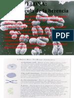 Ac Nucleicos y Proteinas Bq