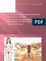 Female Reproductive System (1).pptx