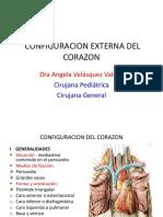 Configuracion Externa Del Corazon