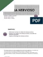 Nervioso Sistema