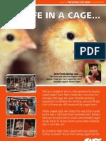 SAFE leaflet