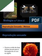 Ppt14 Reproduosexuada Meiose 091214052813 Phpapp01