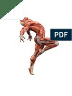 dibujos de musculos